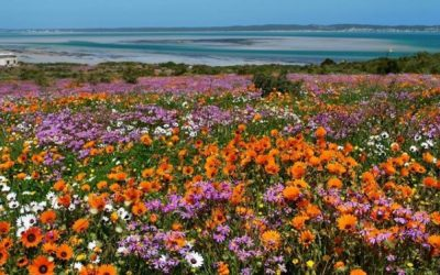 Spring in Cape Town